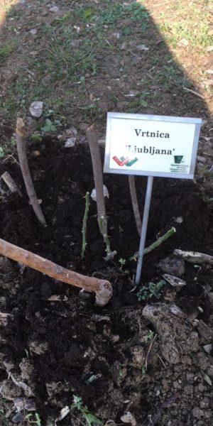 VrtnicaLjubljana_3